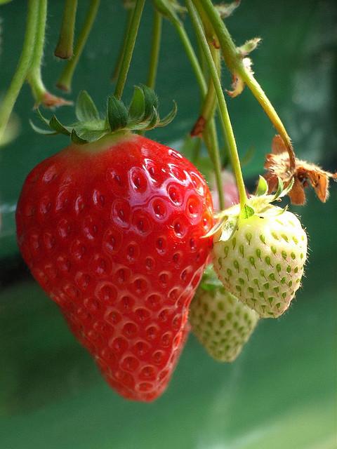 Long Grove Strawberry Fest 2014